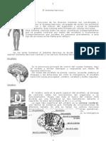 6 a Sistema Nervioso