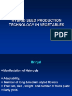 Hybrid Seed Production Technology