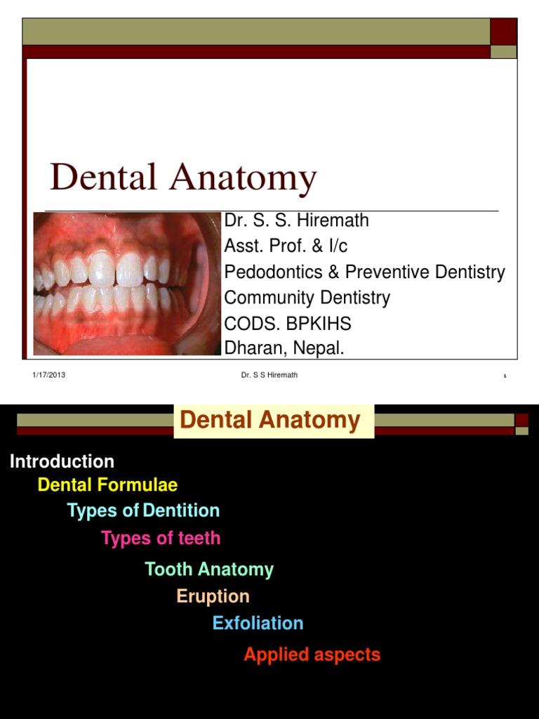Dental Anatomy for MBBS