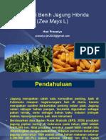 Produksi Benih Jagung Hibrida