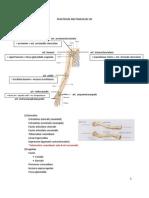 petunjuk praktikum anatomi extremitas superior