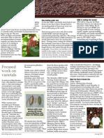 Maya Mountain Cacao Update - January 2013