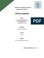 tejidos vegetales (2