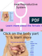 The Female Reproductive System.ppt