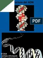 genoma y genes
