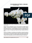 Challenges in Growing Butterfly Orchids