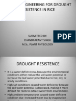 GENETIC ENGINEERING FOR DROUGHT RESISTENCE IN RICE