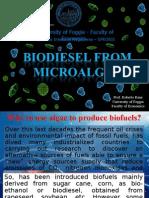 microalgae to biodiesel