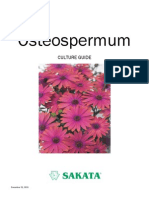 Osteospermum+Culture+Guide