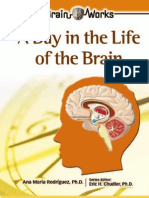 A day in life of a brain