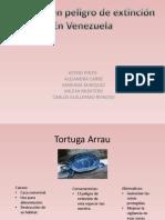 Animales PDF