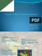 Especies en Peligro de Extincion en Venezuela
