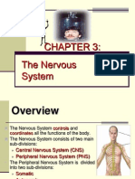 nervouse system