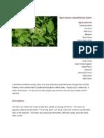 Apocynum cannabinum