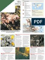 Wildlife Fact File - Reptiles - Pgs. 11-20