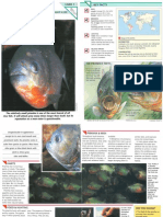 Wildlife Fact File - Fish - Pgs. 1-10