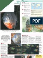 Wildlife Fact File - Fish - Pgs. 1-10