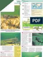 Wildlife Fact File - Fish - Pgs. 21-30