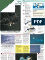 Wildlife Fact File - Fish - Pgs. 31-40