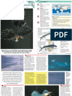 Wildlife Fact File - Fish - Pgs. 31-40