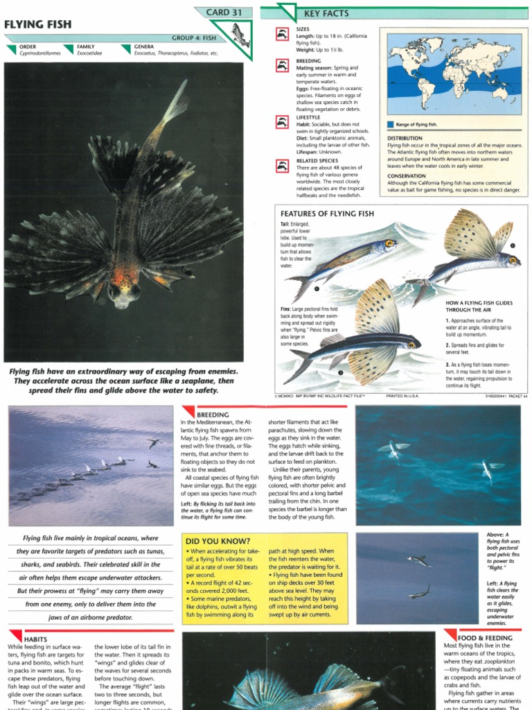 wildlife fact file fish pgs 31 40 sharks coral reef