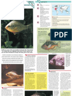 Wildlife Fact File - Fish - Pgs. 41-47
