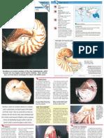 Wildlife Fact File - Primitive Animals - Pgs. 31-40