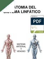 Anatomia Del Sistema Linfatico