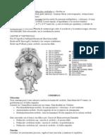 resumen neuroanato