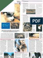 Wildlife Fact File - Animal Behavior - Pgs. 51-60