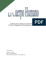 Cuerpo Humano y Sistemas