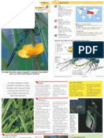 Wildlife Fact File - Insects & Spiders - Pgs. 11-20