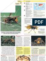 Wildlife Fact File - Insects & Spiders - Pgs. 41-50