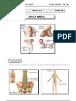 III Bim - 3er. año - Guía 3 - Médula espinal