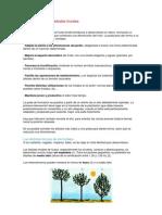 Cómo dar forma a árboles frutales