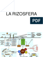 La Rizosfera Power Point