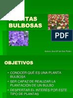 PLANTAS BULBOSAS