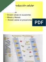 Teorica  4 reproducción celular 2012