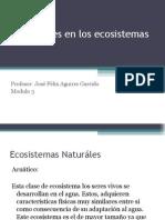 Presentación 4 Relaciones en los  Ecosistemas