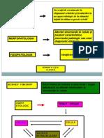 Procese Patologice