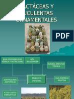 Cactáceas y Suculentas Ornamentales