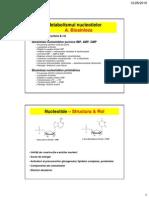 Metabolism Nucleotide