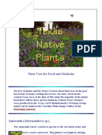 Texas Native Plants and Use Food & Medicine