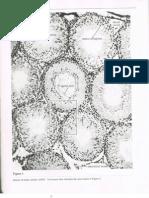 Gametogenesis of Frog Embryos