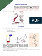 A Molécula da Vida