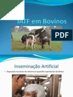 IATF Em Bovinos JR