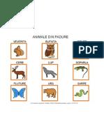 Animale Din Padure