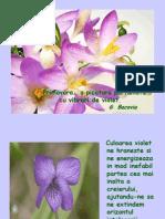 Vibrari de violet