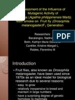 Assessment of Mutagenic Activity of Manila Copal smoke to Drosophila melanogaster