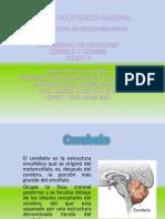 PATOLOGIA completa.pptx